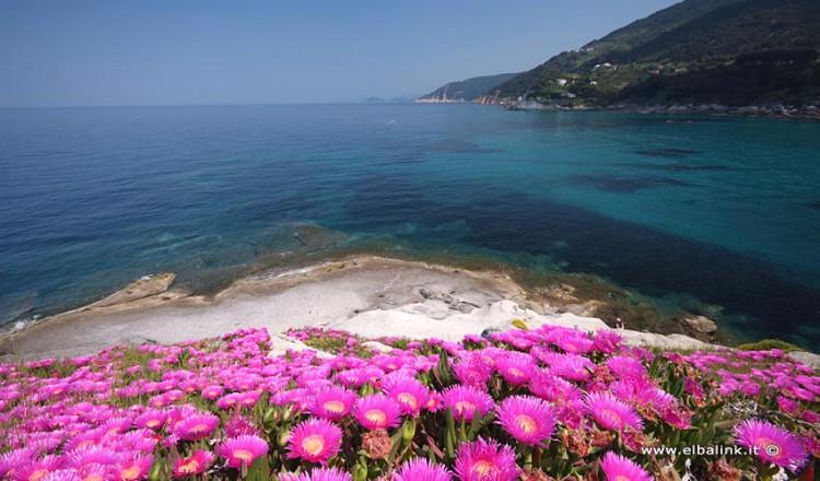 Spiaggia di Sant'Andrea - Isola d'Elba